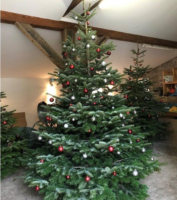 nordmanntanne weihnachtsbaum geschm ckt 2m online im. Black Bedroom Furniture Sets. Home Design Ideas